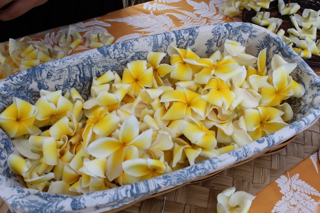 하와이 꽃 플루메리아 Plumeria (4)
