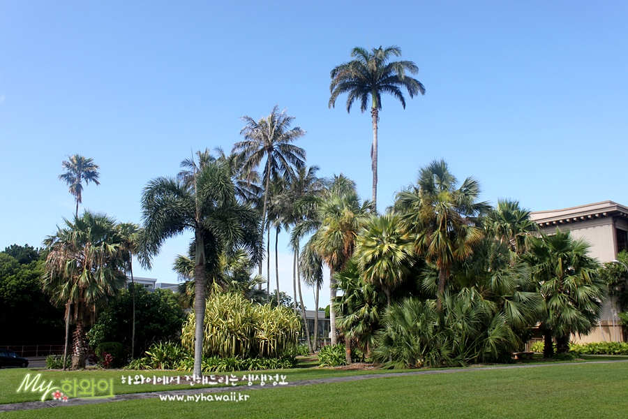 하와이 유학 정보 대학교 (3)