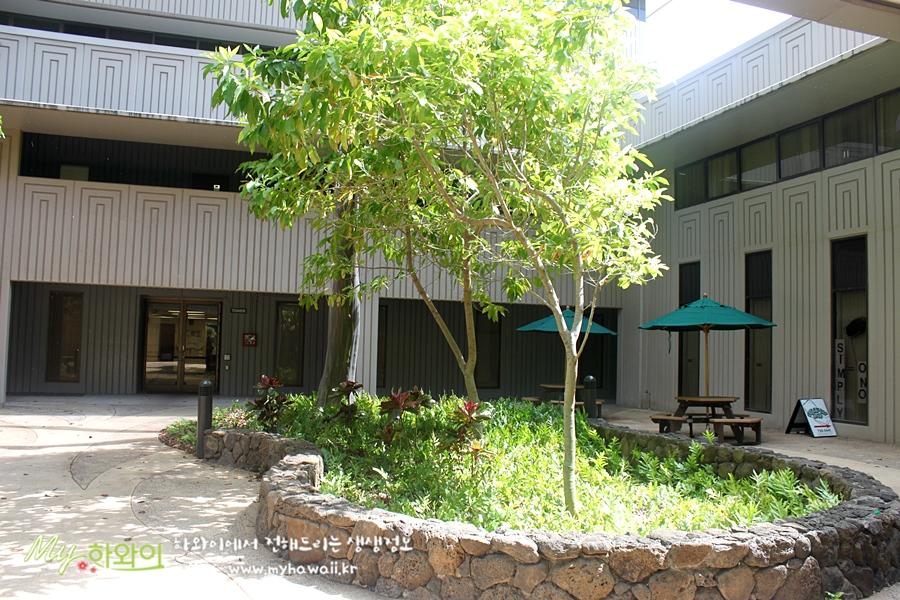 하와이 유학 정보 대학교 (5)
