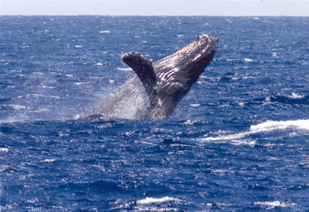 whale012_2002